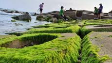 Du khách đổ xô check-in bãi đá rêu xanh đẹp nhất Phú Yên