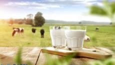 Tác hại của sữa bò: Nên hay không bỏ sữa khỏi chế độ dinh dưỡng?
