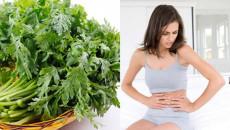Mách chị em cách chữa đau bụng kinh hiệu quả từ cây ngải cứu