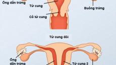 tử cung đôi, mang thai, sinh đẻ, hiếm muộn, điều trị, cuasotinhyeu
