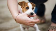 tiêm phòng dại, chó dại, chó cắn, tiêm phòng vắc xin, theo dõi chó 15 ngày