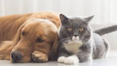 Chó mèo có thể lây truyền bệnh lậu sang cho người được không ?