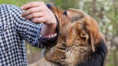 Nên làm gì khi bị chó cắn sau khi tiêm ngừa dại được 1 tuần ?
