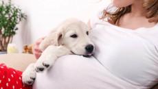 Mẹ bầu bị chó cắn liệu thai có bị ảnh hưởng không?