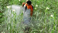 Vô tình hít phải thuốc trừ sâu khi đang mang thai...