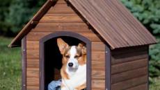 Chó mất sau khi cắn người 4 tháng có phải là do bị dại?