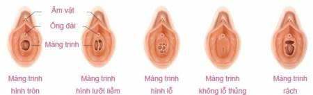 khả năng sinh sản, cơ quan sinh sản, phụ nữ, cua so tinh yeu
