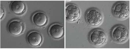 phát minh, thay đổi gen, khi mang thai, nhà khoa học, không bệnh tật