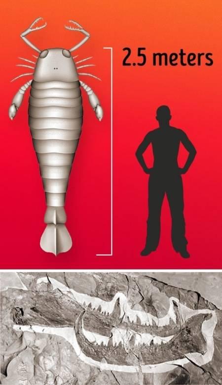 sinh vật lạ, sinh vật khổng lồ, cua so tinh yeu