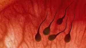 vì sao xuất tinh có máu xuất tinh, xuất tinh ra máu, sức khỏe sinh lý nam giới, cua so tinh yeu