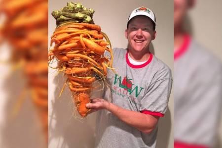 củ cà rốt, cà rốt khổng lồ, cua so tinh yeu