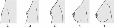những dấu hiệu đặc trưng của tuổi dậy thì, tăng chiều cao, phát triển chiều cao, giai đoạn dậy thì, phát triển ổn định, tập luyện thường xuyên, chế độ dinh dưỡng, chu kỳ kinh nguyệt, cua so tinh yeu
