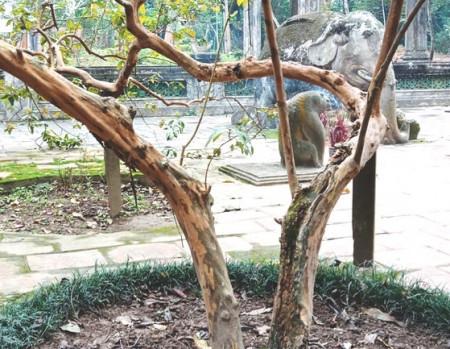 khu di tích, khu di tích Lam Kinh, Thọ Xuân, Thanh Hóa, Lê Lợi, cua so tinh yeu
