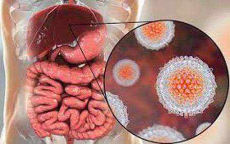 Bệnh truyền nhiễm, Bệnh lây truyền qua đường ăn uống, Bệnh truyền nhiễm qua đường ăn uống, Viêm gan A, Bệnh tiêu chảy, cua so tinh yeu