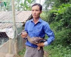 Cử nhân 8x kiếm nửa tỷ mỗi tháng, nuôi vịt, cửa sổ tình yêu.