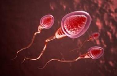 tinh trùng loãng, mào tinh hoàn, túi tinh, tiền liệt tuyến, chế độ dinh dưỡng, sinh hoạt hợp lý,