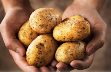 khoai tây, ăn sai cách, sức khỏe, ngộ độc, tăng huyết áp, cua so tinh yeu