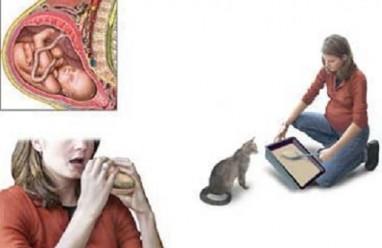 Bà bầu cần thận trọng với chó mèo để tránh nhiễm toxoplasma trong thai kỳ, nhiễm Toxoplasma Gondii, thai kỳ, cua so tinh yeu