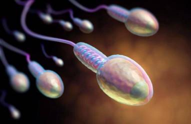 Nuôi cây tinh trùng từ tinh tử, điều trị vô sinh nam không có tinh trùng, sinh thiết tinh hoàn,tinh tử, tinh trùng
