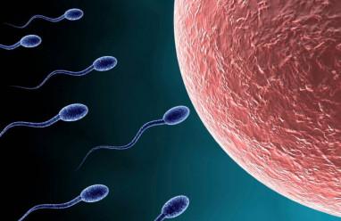ảnh hưởng, chất lượng tinh trùng, sức khỏe tình dục