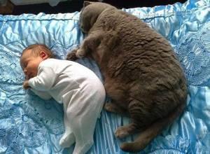 mèo, mèo ú, mèo béo, đáng yêu, cute, csty, cuasotinhyeu.vn