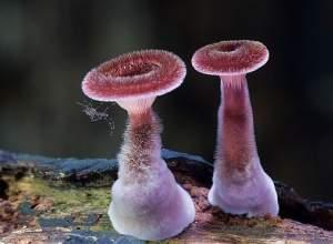 ảnh đẹp, thiên nhiên, nấm, thế giới các loại nấm,sinh vật