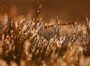 ảnh đẹp, thiên nhiên, long lanh, sương sớm, bình minh