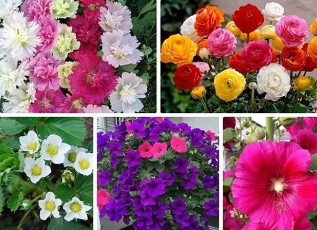 hoa Tết, Tết 2018, hoa dâu tây, cúc đồng tiền mini, dạ yến thảo, cua so tinh yeu