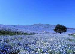 Hoa tử đằng, Vườn hoa nhật bản, Công viên ven biển Hitachi, Con đường ánh sáng tuyết Otaru, Đồi cát Tottori-sakyu, Núi Phú Sĩ, Phóng xạ, Sóng thần nhật bản