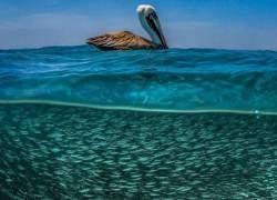 Mê mẩn vẻ đẹp của đại dương