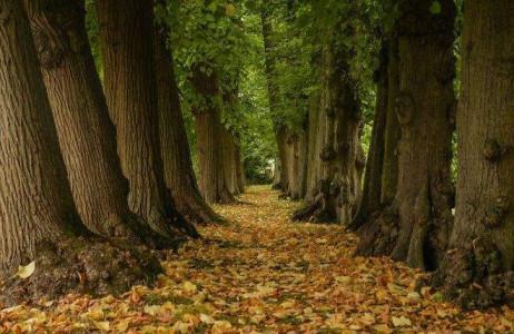 khoảnh khắc mùa thu say đắm lòng người