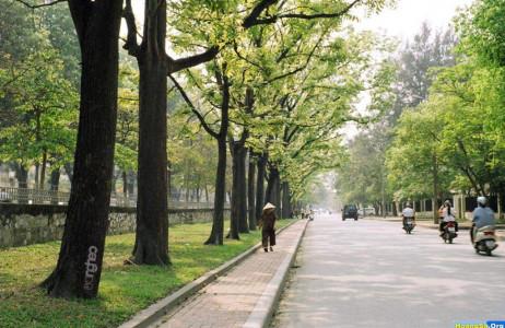 Đi bộ trên những con phố như Hoàng Diệu, Hàng Bài, Bà Triệu hay trước cổng Nhà thờ Lớn Hà Nội mùa thu để tận hưởng hương hoa sữa dường như đã thành niềm say mê của nhiều người yêu Hà Nội.