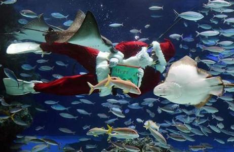 Ông già Noel vui đùa cùng đàn cá trong thủy cung Ánh Dương ở Tokyo.