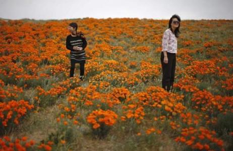 Hai phụ nữ trung niên ngắm nhìn hoa anh túc Califonia nở rộ ở Lancaster, California ngày 18/3