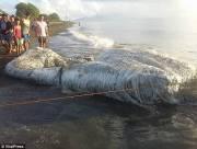 Sinh vật biển, khổng lồ, xác, Philippines, cua so tinh yeu