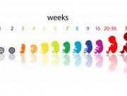 thai 1 tuần tuổi, thai 2 tuần tuổi, mang thai, có bầu