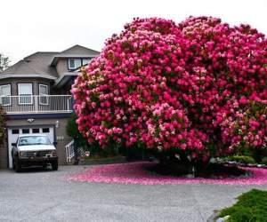 Loài cây, thực vật, cổ thụ, vĩ đại