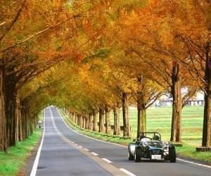 mùa thu, cảnh đẹp, thế giới, con đường mùa thu, hàn quốc, nhật bản, trung quốc, mỹ, cannada, pháp