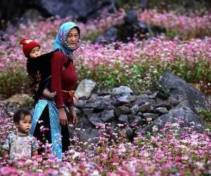 Mùa hoa, con đường hoa, hoa lộc vừng, hoa sữa, hoa ban, dã quỳ, đỗ quyên, hoa cải trắng, hà nội, đà lạt, tây bắc, mộc châu