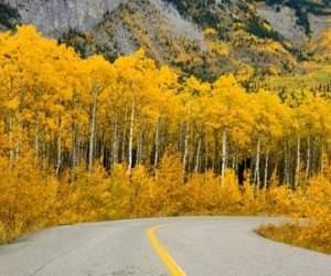 Rừng lá phong,công viên, lãng mạn, dãy núi, đẹp nhất, nổi tiếng, mùa thu, cây gỗ, cây thông, ngắm cảnh