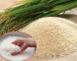 cách chọn gạo ngon, mẹo chọn gạo ngon, bí quyết chọn gạo ngon, cua so tinh yeu