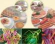 Cục An Toàn Thực Phẩm, Bệnh Lây Truyền Qua Thực Phẩm, Ngộ Độc, Thực Phẩm Nhiễm Khuẩn, cua so tinh yeu