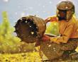 phim tài liệu, Honeyland, kỳ diệu, Oscar, lịch sử