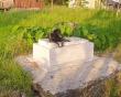 Cậu chủ nhỏ qua đời đã 3 năm, chú chó ở Long An vẫn quấn quýt bên mộ không rời khiến nhiều người bất ngờ