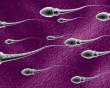 thời gian sống của tinh trùng, tinh trùng được sản sinh qua 4 bước, giai đoạn tinh tử, giai đoạn tinh bào, giai đoạn tiền tinh trùng, giai đoạn tinh trùng trưởng thành, thời gian sống của tinh trùng trong môi trường âm đạo, thời gian sống của tinh trùng trong môi trường cổ tử cung, thời gian sống của tinh trùng trong ống dẫn trứng, thời gian sống của tinh trùng ngoài không khí