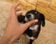 Trẻ bị chó cắn ở tay có cần cho đi tiêm phòng ngừa không ?