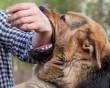 Có nên đi tiêm phòng khi chó cắn không chảy máu không ?
