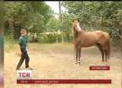 ngựa tấn công, dương vật, ukraine, bé trai, trẻ em, chuyện lạ, shock,