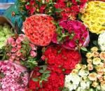 mẹo vặt, chọn hoa, hoa hồng, ngày tết, cua so tinh yeu