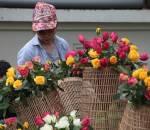 Hoa hồng, lễ hội hoa hồng Bulgaria, cua so tinh yeu